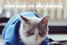 DIY-Pet-Sweater