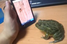 DIY Phone App Frog Game