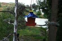 DIY-Planter-Bird-Feeder