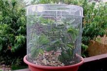 DIY-Planter-Dish-Vivarium