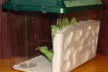 DIY-Plaster-Formicarium
