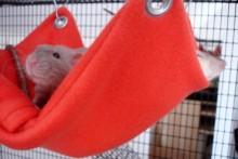 DIY-Pocket-Rat-Hammock