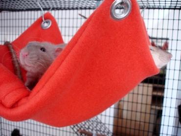 Как сшить домик крысы