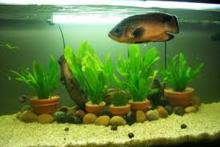 DIY-Potted-Aquarium-Plants