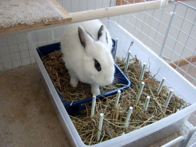 Litter Box With Hay Rack 1000 Images About Hay Rack Litter