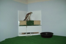 DIY-Raptor-Corner-Perch