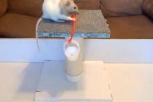 DIY-Rat-Basket-Pulley-Trick