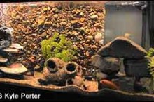 DIY-Rock-Aquarium-Background