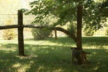DIY-Rustic-Fence