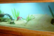 DIY-Sand-Cement-Aquarium-Cave