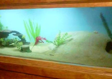 Diy Sand Cement Aquarium Cave Petdiys Com