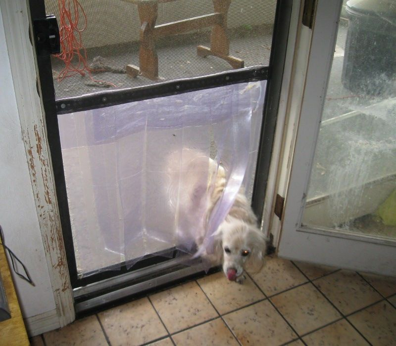 Diy Screen Door Dog Door Petdiys Com