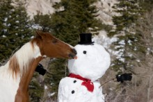 DIY-Snowman-Horse-Treat