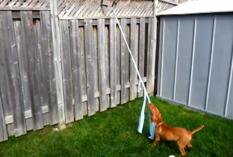 Diy Spring Pole Dog Toy Petdiys Com