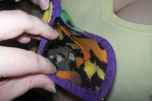 DIY-Sugar-Glider-Bonding-Bag