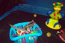 DIY-Sugar-Glider-Toy-Basket