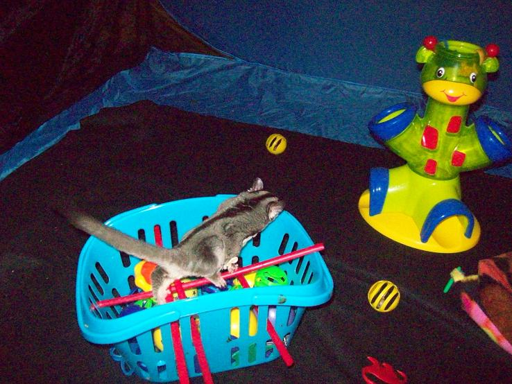 Toys For Sugar : Diy sugar glider toy basket petdiys