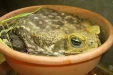 DIY-Toad-Bed