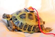 DIY-Tortoise-Tracker