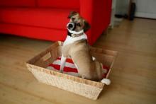DIY-Towel-Pad-Basket-Bed