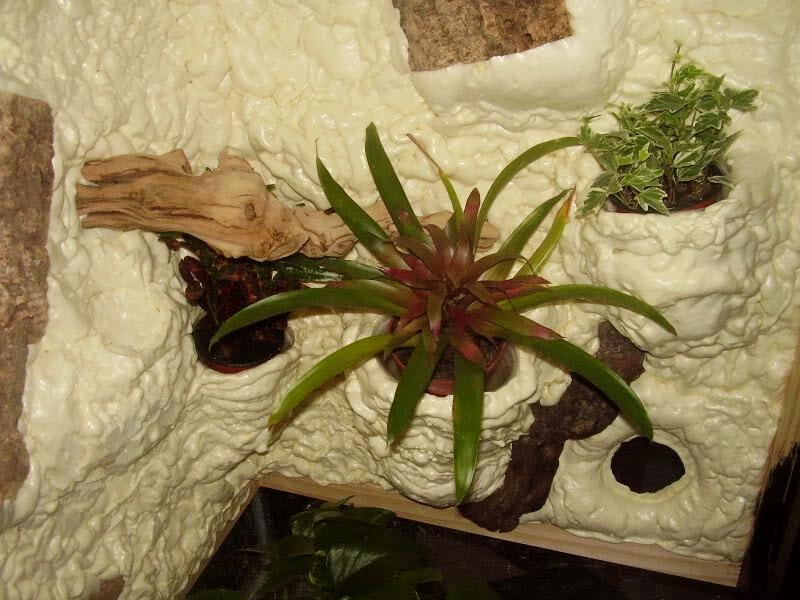 Diy Tree Frog Climbing Background Petdiys Com