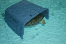 DIY-Turtle-Hide