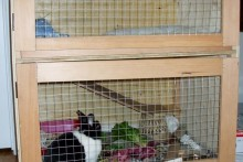 DIY-Two-Story-Rabbit-Hutch