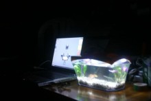 DIY-USB-Powered-Fish-Tank