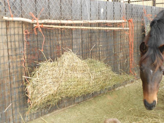 hay system fencing product large feeder horse slow