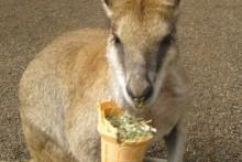 DIY-Wild-Mammal-Treat