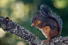DIY-Wild-Squirrel-Portrait