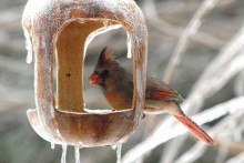 DIY-Winter-Bird-Feeding