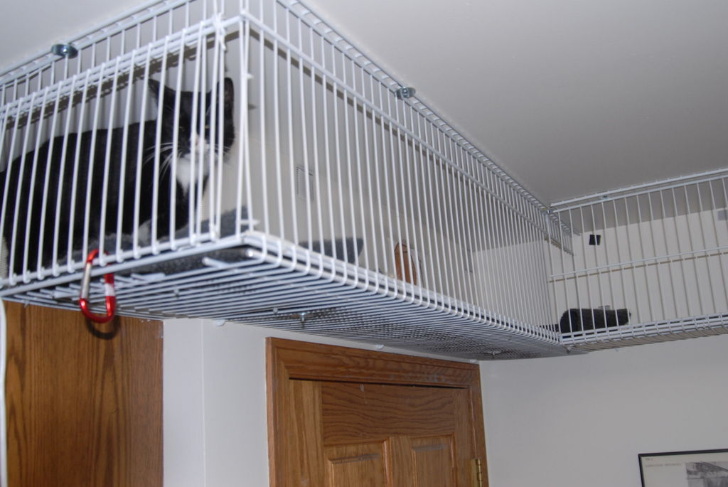 Diy Wire Shelves Catwalk Petdiys Com
