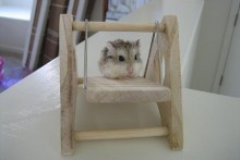 DIY-Wood-Hamster-Swing