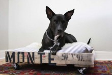 DIY-Wood-Pallet-Dog-Bed