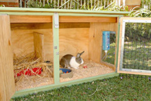 DIY-Wood-Rabbit-Hutch