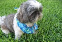 Fabric-Dog-Cooling-Collar