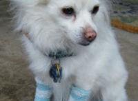 Fabric-Sock-Dog-Leg-Warmers1