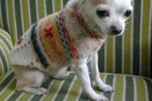 Fabric-Vest-Dog-Sweater