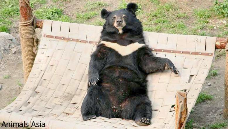 diy fire hose bear hammock   petdiys    rh   petdiys