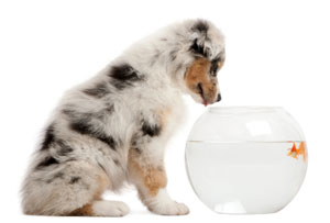 Fish cheese training treats for What does fish oil do for dogs