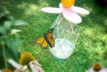 Glass-Jar-Butterfly-Feeder