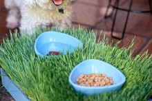 Grass-Tray-Pet-Placemat