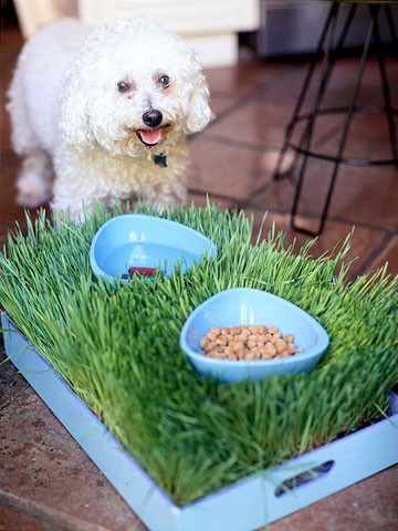 Grass tray pet placemat