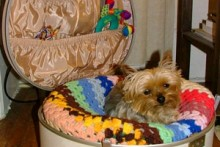Hat-Case-Small-Dog-Bed1