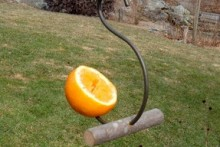 Hook-Fruit-Bird-Feeder
