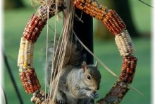 Indian-Corn-Wreath-Feeder