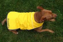 Jacket-Dog-Raincoat