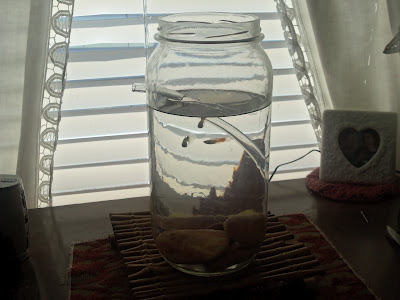 Self cleaning fish bowl diy joy studio design gallery for How to clean an old fish tank