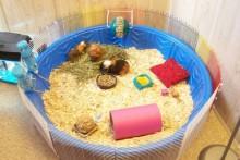 Kiddie-Pool-Guinea-Pig-Cage